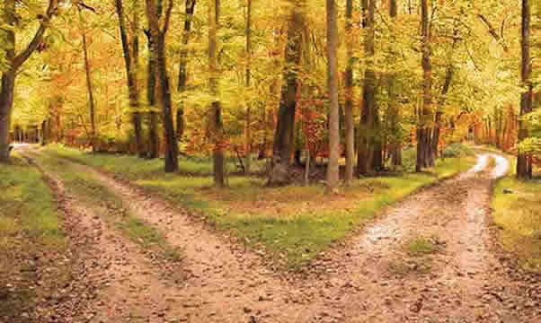 two paths in woods